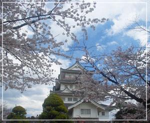 千葉城と桜。