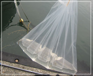 えのすいクラゲの日」、今日のクラゲ水……