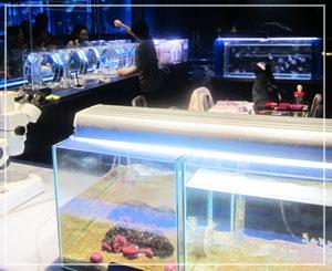 「すみだ水族館」、バックヤードが表に出てきた風な面白い展示