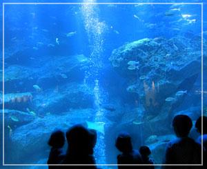「すみだ水族館」にて、これが一番の大水槽……かな?