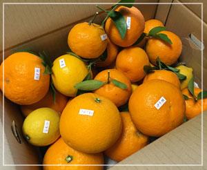原農園さんの「旬の食べごろ柑橘セット」。わくわくの、この内容。