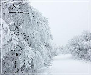 ぎりぎり晴れたタイミングで、写真ぱちり。雪はもう最高で。