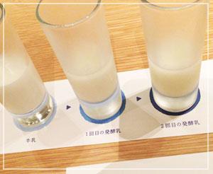 初めて飲んだ、カルピスの生成過程の発酵乳。すっっっっっっっぱいんです……!