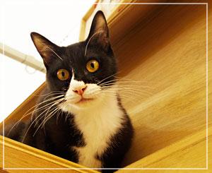 この子は雄猫のアルファ。妹猫はロメオ。2匹合わせて「アルファロメオ」ですって。