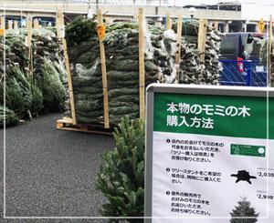 年々高くなるIKEAのツリー、今年は2999円に。
