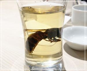 スズメバチの味……?と言われてもわからないけど、ハチ酎。見た目すごいね。